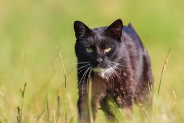 Kleine Katze die im Gras spielt und nach vorn schaut.