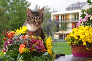 Herbst Katze sitzt auf Balkon mit herbstlicher Blumendekoration