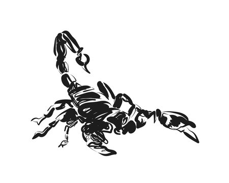 Vector sketch of scorpion