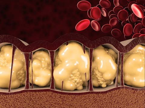 3d Illustration of Fat Cells with blood cells on red background