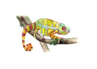 Chameleon Watercolor