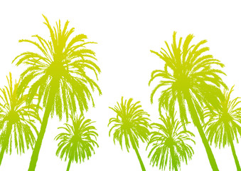Palm tree silhouettes isolated on white