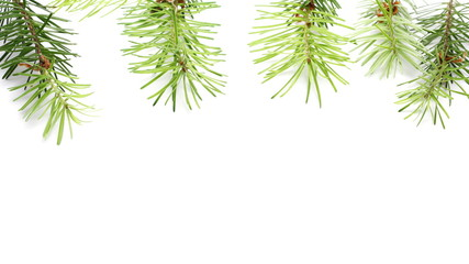 Pine branch decoration isolated on white background