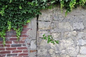 Ancien mur de briques et pierre avec végétation verte