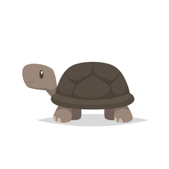 Tortoise turtle vector isolated