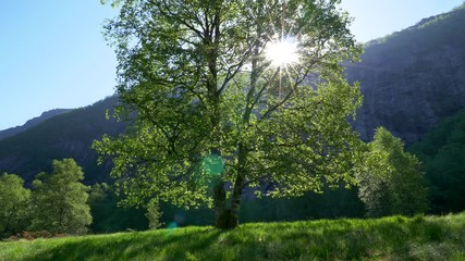 Wall Mural - Sun breaking through green tree leaves. Beautiful summer landscape. 4K