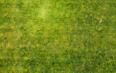 Grass texture. Aerial photo of green lawn. Wall mural