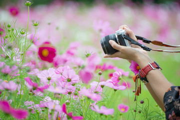 Photographer woman take photo with mirrorless camera.People side view,Young traveler female sightseeing with beautiful cosmos flower background in garden. Travel and Photographer concept.
