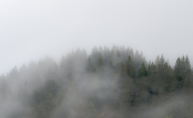 trees and forest in the fog and mist in the hills of Switzerland
