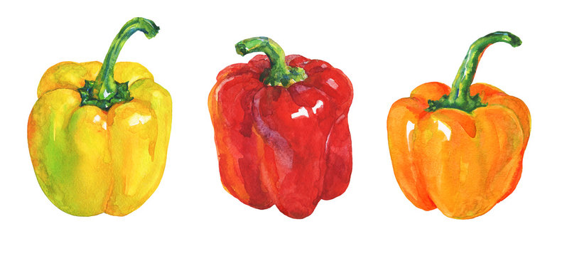 Watercolor yellow, red, orange paprika on white background. Hand drawn vegetable illustration. Painting set of bell peppers