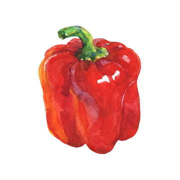 Watercolor red paprika on white background. Hand drawn vegetable illustration. Painting bell pepper