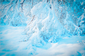 branch heavily covered with snow in the woods, blue color