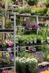 Lot of different flowers and plants are there on shelves for sale at a flourishing garden center. Beautiful flowers everywhere - from top to bottom. Vertical image.