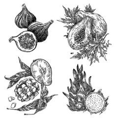 Set of exotic fruits. Figs, papaya, mango and dragon fruit. Sketch. Engraving style. Vector illustration.