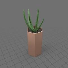 Aloe plant in a copper pot