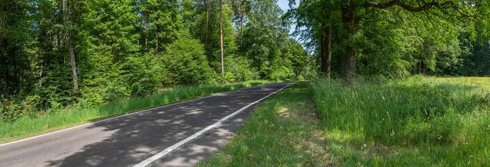 Landstraße im Pfälzer Wald