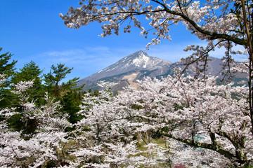 亀ヶ城跡からの磐梯山と桜(福島県・猪苗代町)