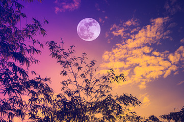 Wall Mural - Sky with bright full moon over bamboo trees in the evening.