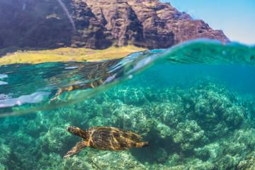 Turtle swimming near the cliffs