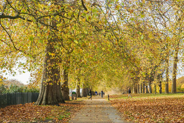 romantic background - selective focus of the fallen leaves and trees in park