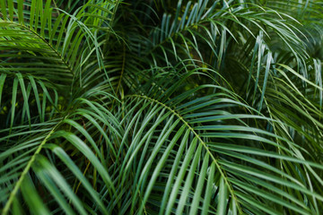 Tropical foliage background photo. Concept of botany and leaves.