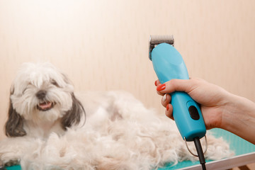 Groomer is cutting dog hair in service
