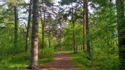 Summer landscape: a forest road through the forest