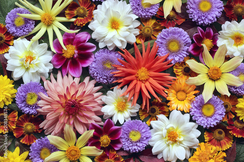 Beautiful floral background of garden flowers, top view