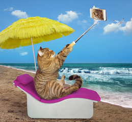 The cat under a yellow umbrella takes selfies on the beach.