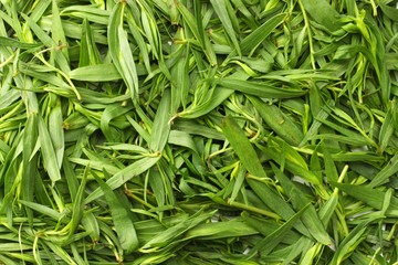 Tarragon leaves background. Tarragon leaves texture.( Artemisia dracunculus )
