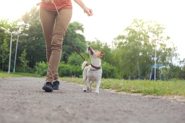 A girl with a dog on a leash of the Jack Jack Russell Terrier walks along the alley in the park