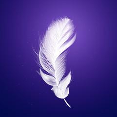 Shiny white feather on purple background.