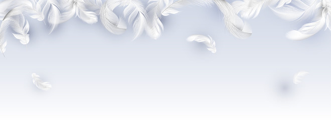Website header or banner with white feathers.