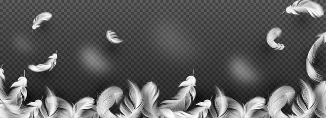 Website header or banner with white feather on transparent background.