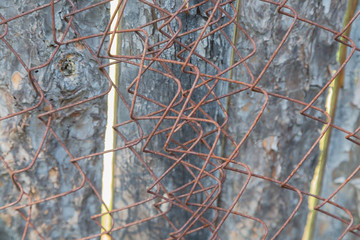 Iron mesh for fence with rust and paint.