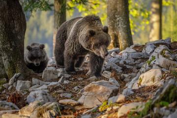 Female bear with cub