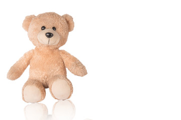 Bear isolated white background clipingpart.