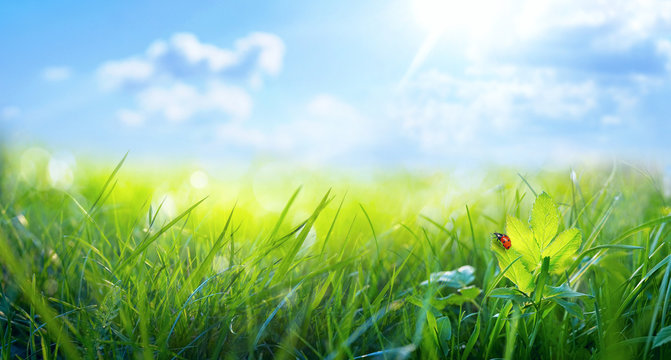 Spring summer background with fresh green grass and ladybug against a blue sky in nature, close-up macro. Panoramic view, copy space.