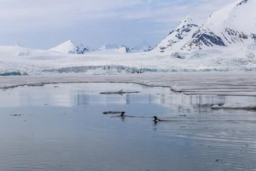Wiosna na południowym Spitsbergenie