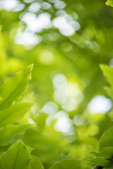 abstract, Green leaf bokeh nature dark green background.