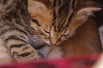 Cute kitten sleeping in a basket
