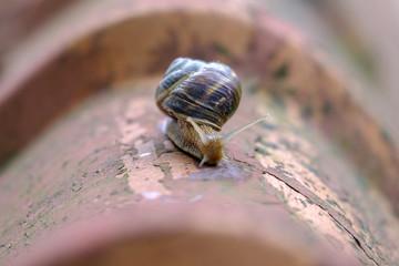 The snail crawls along the shingles close-up 3