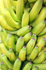 Bunch of bananas typical of the Canary Islands