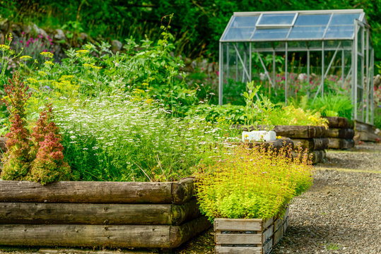 A vegetable garden with a greenhouse in summer.