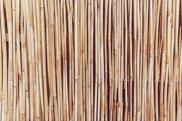 The fence of the stalks of cane