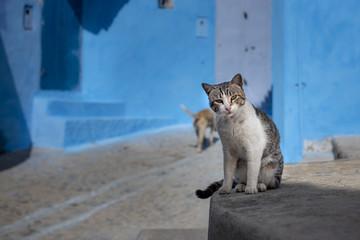A cat in a street of Chefchaouen