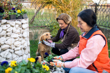 Women care for flovers in home yard with dog