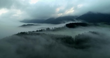 Fototapete - Nebel über dem Schwarzwald