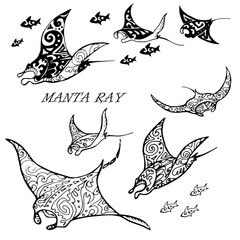 Manta ray and fish in the sea ,black and white stylized vector illustration