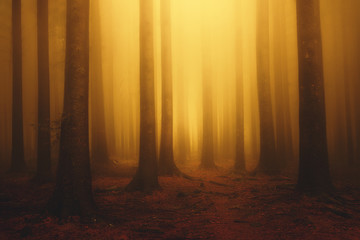 Garden Poster Forest foggy fantasy dreamy forest with sunshine at morning in autumn